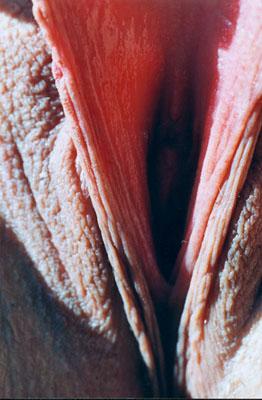 Vulva-galerie Category:Close